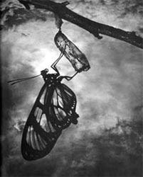 José Oticica - Fotógrafo Moderno