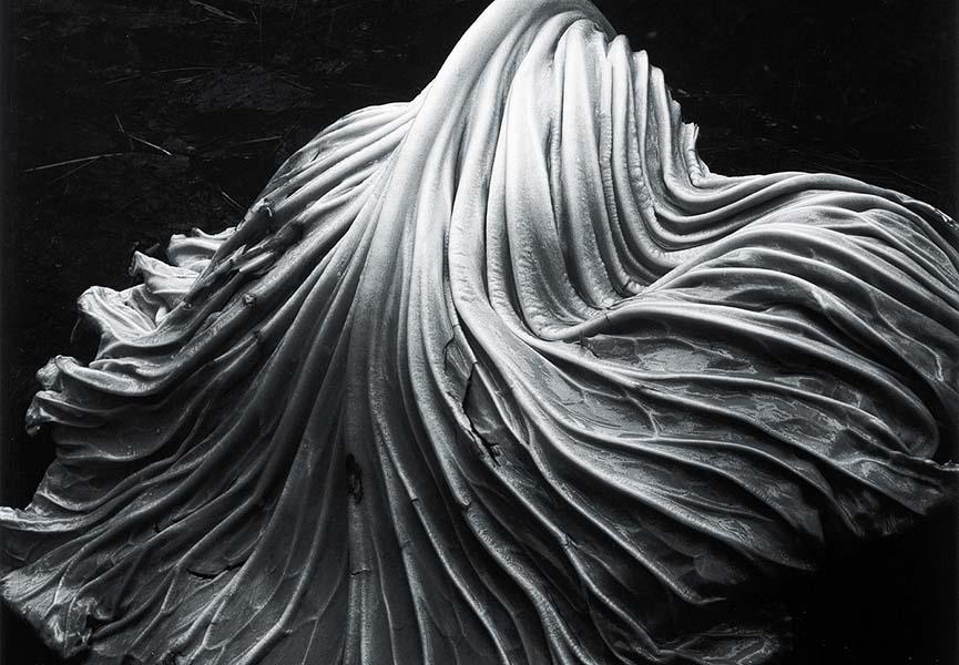 Edward-Weston-Cabbage-Leaf-1931-detail