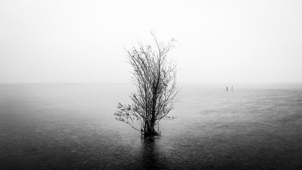 Giuseppe Milo - A árvore solitária - Lago Garda, Itália