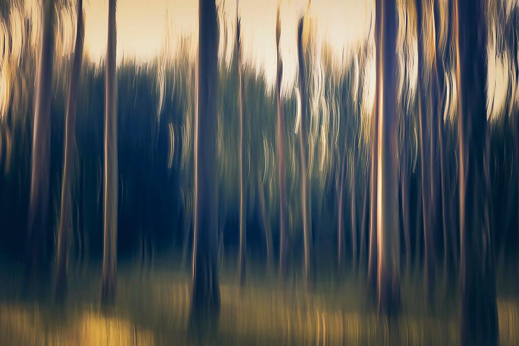 Elizme ~ Floresta Khaki